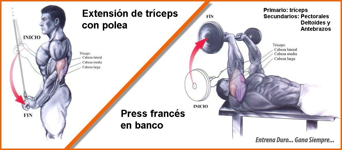Ejercicios de pectoral y triceps